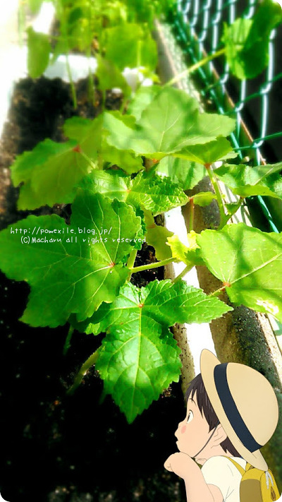 夏植え野菜