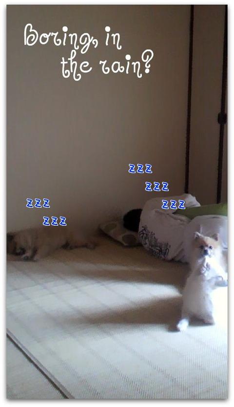 429f478d.jpg