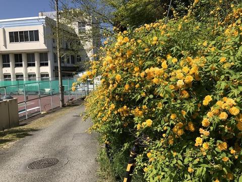 17.4.24亀岡