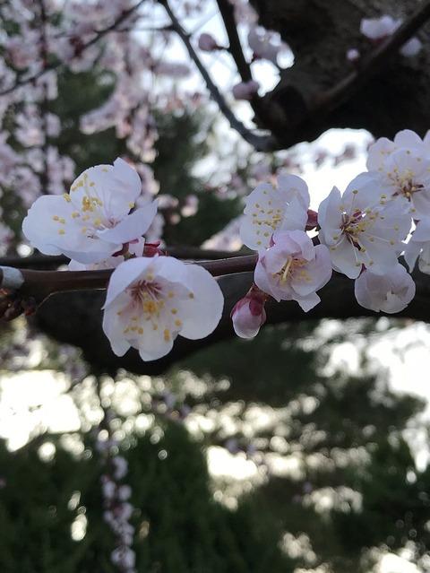18.3.23亀岡高校