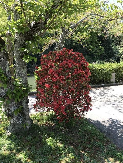 17.4.23南郷公園