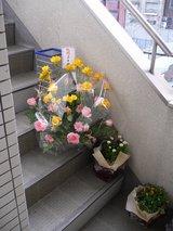 Cafe萌え萌え_入り口付近に置かれたお祝いの花