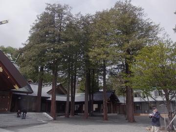 北海道神宮 (17)