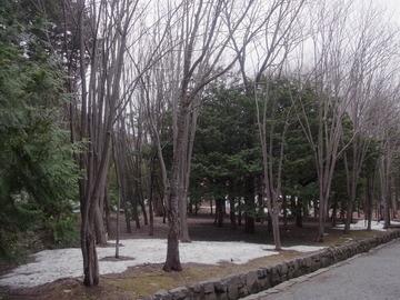 北海道神宮 (10)