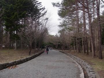 北海道神宮 (9)