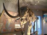 四日市博物館