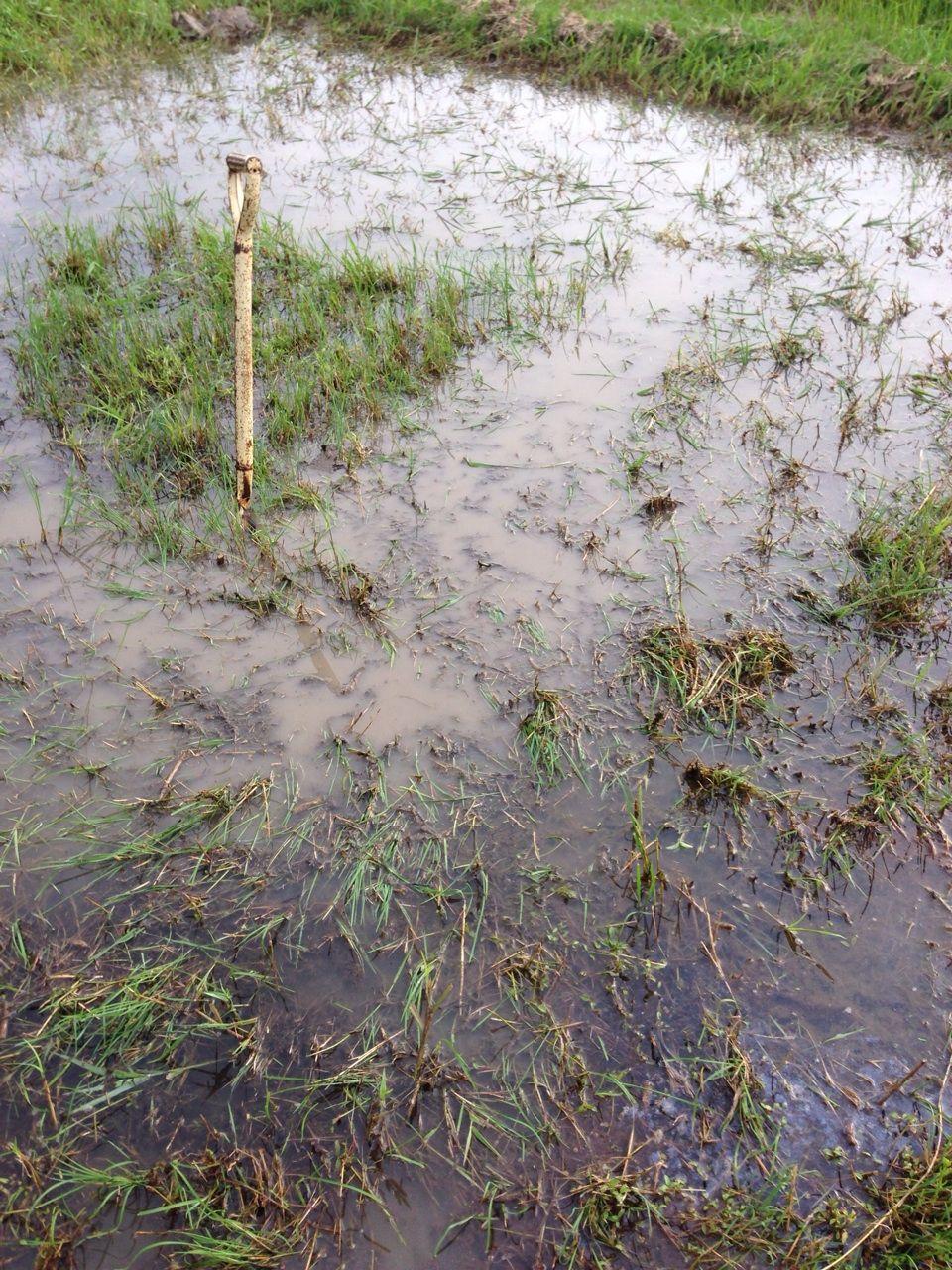 泥んこプール