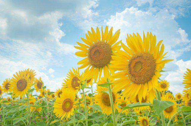 【連休】夏休みの過ごし方!!!社会人の約4割「自宅で過ごす」らしいw