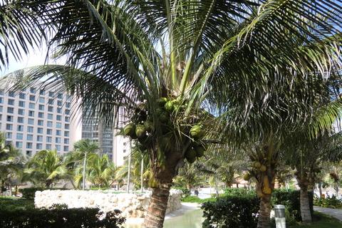 Cancun Mexico 059