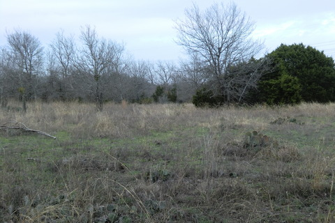 Walnut creek metropolitan park 0304 009