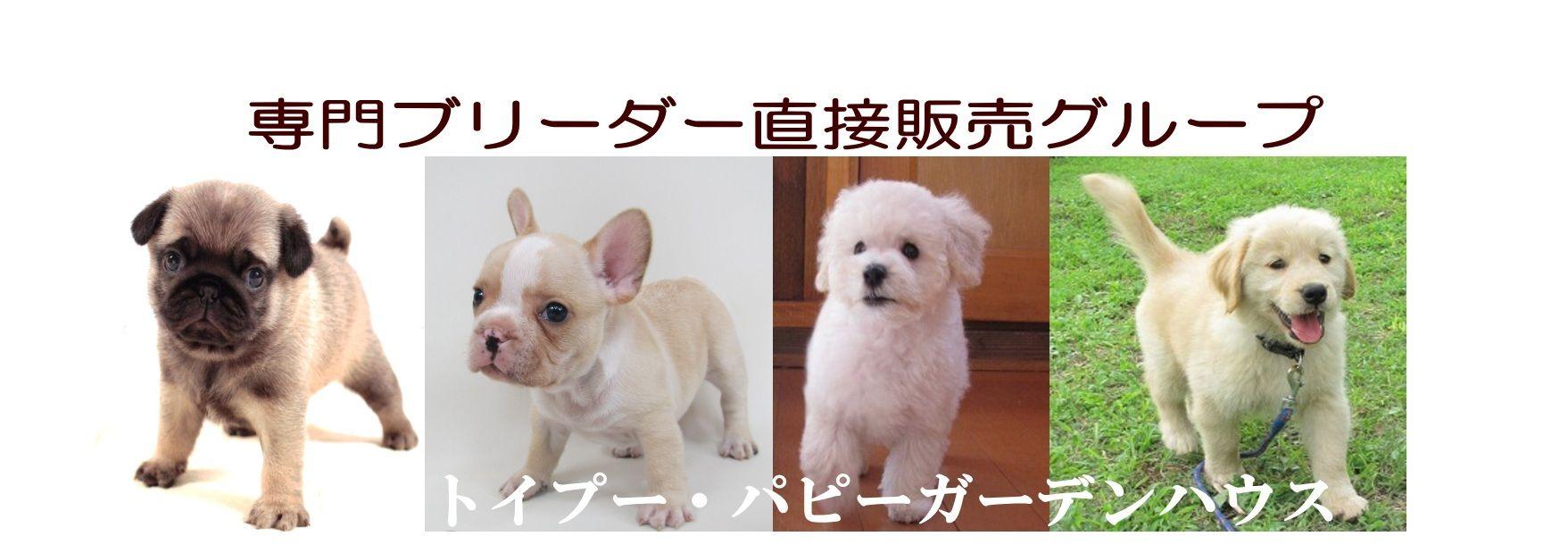 埼玉 ます 子犬 譲り 無料