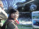 上野動物園ペンギン