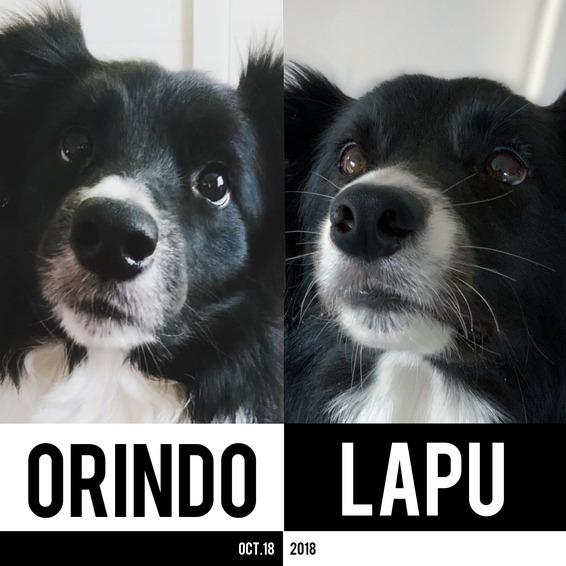 Orindo_Lapu