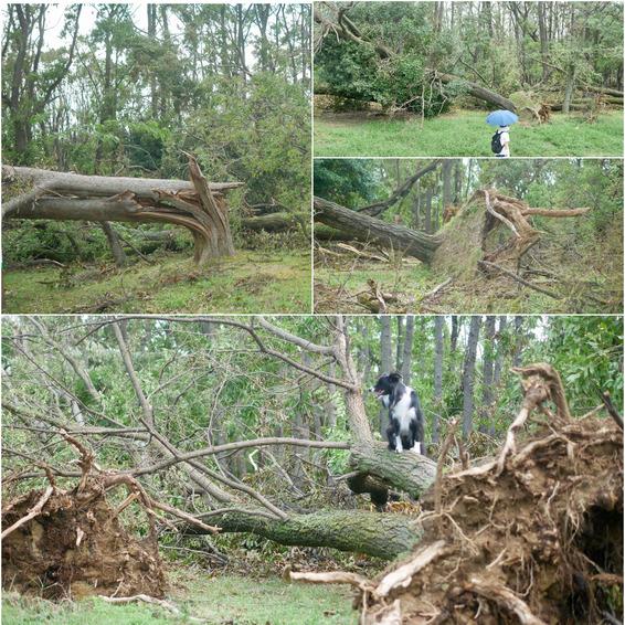 台風一過大泉緑地