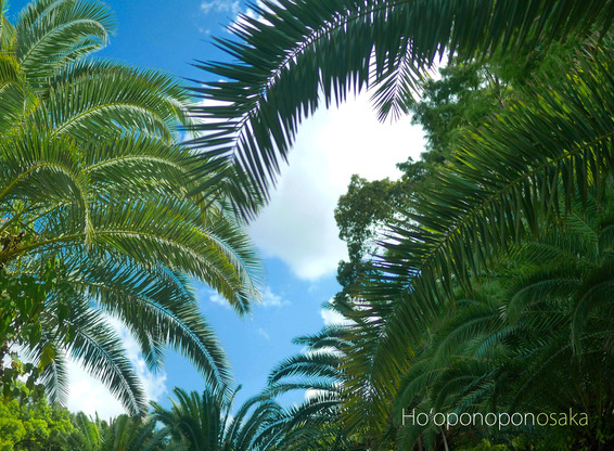 Hoʻoponoponosaka