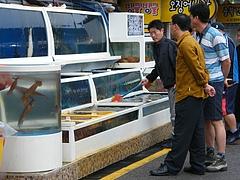韓国・魚屋1