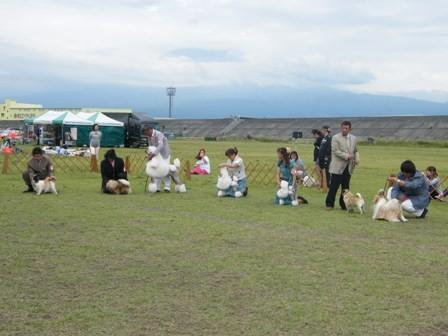 dogshow pug