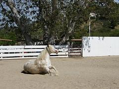 お馬さん3