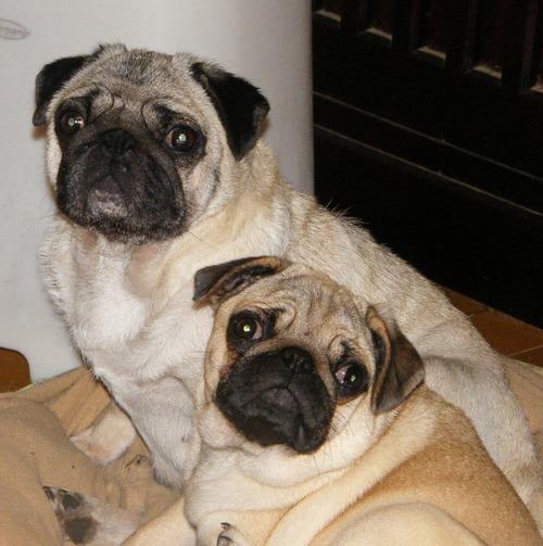 Bijou&Cheri1