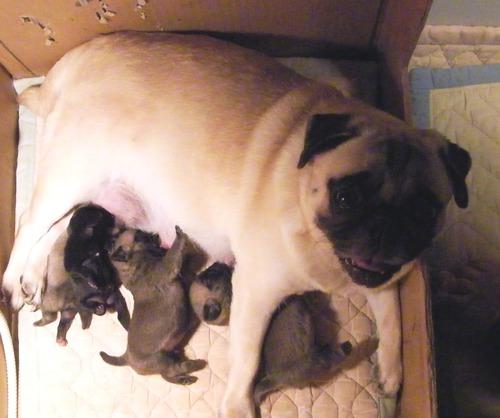 maturi babies1