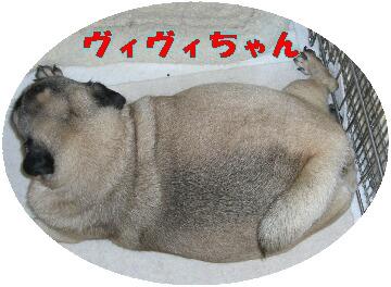 c21f62a4.jpg
