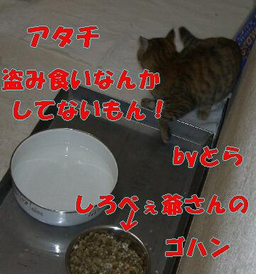 cd0288f3.jpg