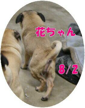 d3ab2fd4.jpg