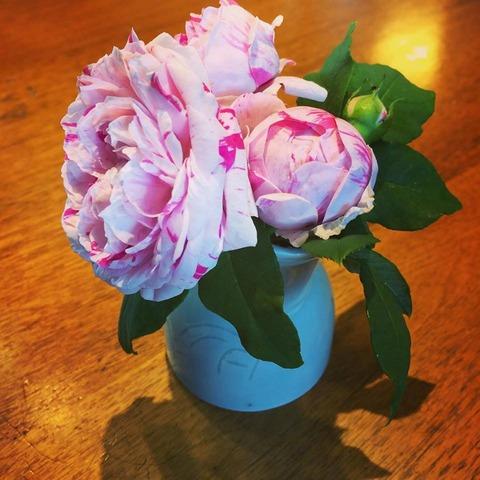 ぽこさん、薔薇の香りは集中できるってさ