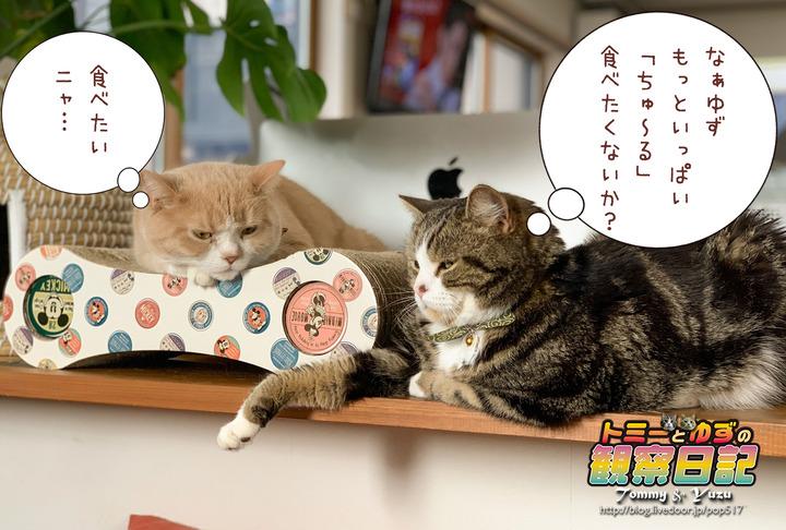 200302_Tommy&Yuzu00003