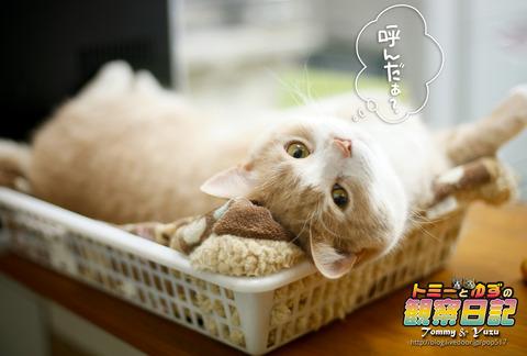 170213-Tommy&Yuzu0002