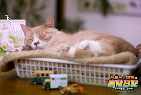 170217-Tommy&Yuzu0003
