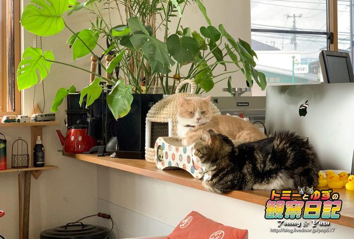 200302_Tommy&Yuzu00001