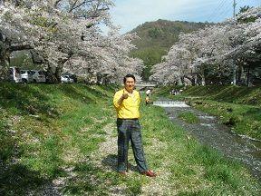 「観音寺川」の桜吹雪