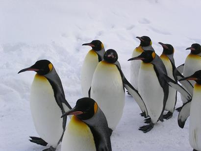 100328ペンギン