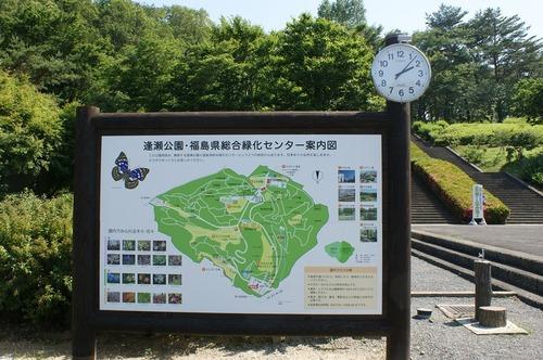 新緑の逢瀬公園(郡山市)