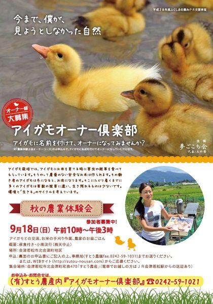 秋の会津で稲刈りとアイガモとの交流はいかがでしょう!