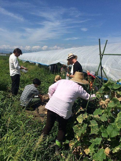 160831野菜収穫