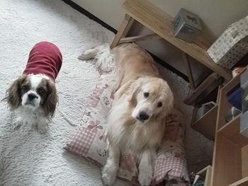 120222犬の兄弟