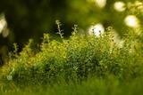 grass-6353411_1280
