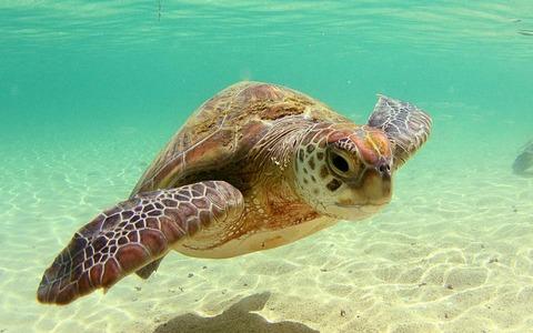 beautiful-sea-turtle-wallpaper_99529-1920x1200