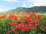 higan-ibukiyama