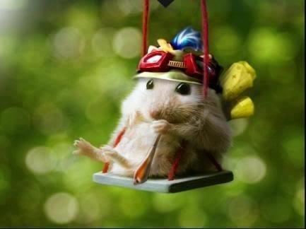 teemo-hamster
