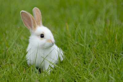 tests cosmetiques lapin