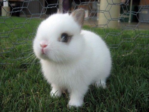 petit-lapin