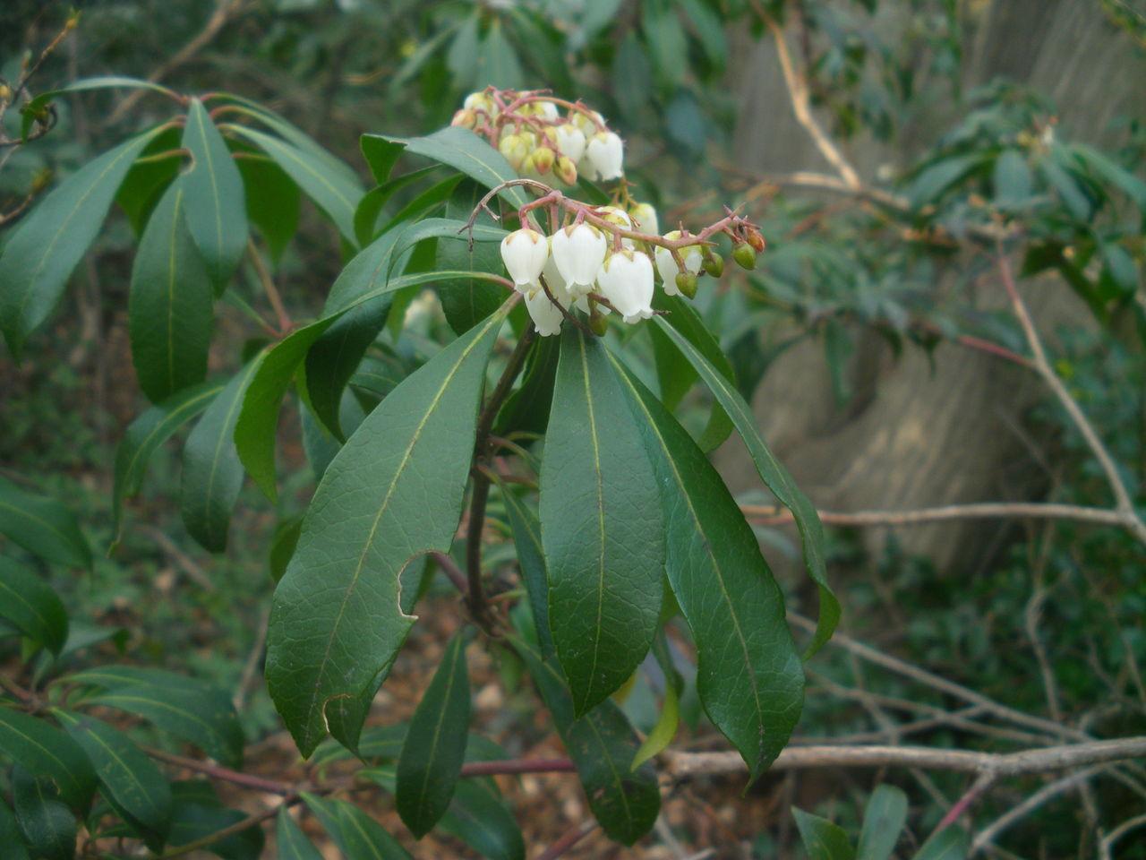 石坂の森のウォークで春を感じま...