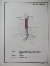 DSCF9387