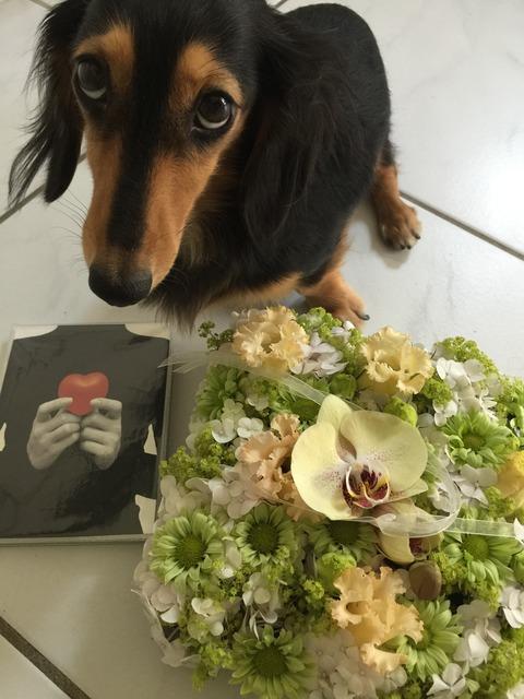 ココさんへのお花