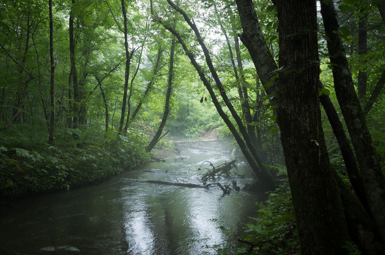 勇払川(7/13) : 山に野に川に呑...
