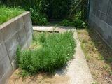 s-201006 あぷりこ菜園 020