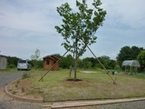 s-20100613 あぷりこ菜園 010
